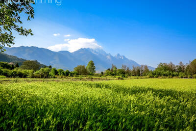 Exploring Lijiang's countryside: A day-trip to Baisha