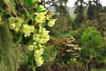 Xinzhu Botanical Reserve